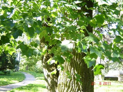FOTKA - Hamzův park a arboretum Luže - Košumberk,,....