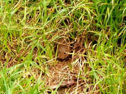 FOTKA - Zvědavá myška