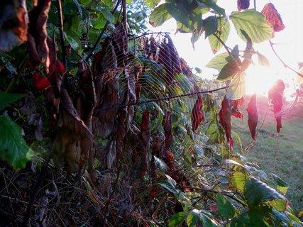 FOTKA - Svítání s pavučinou