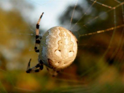 FOTKA - Pavouk ve svém domečku