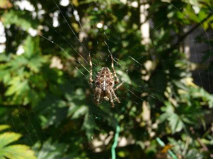 FOTKA - pavouk