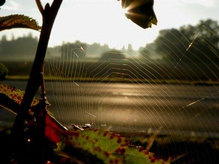 FOTKA - Pavoučí sítě u silnice