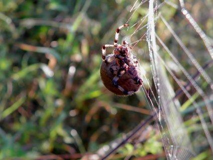 FOTKA - Pavouk na trampolíně :-))