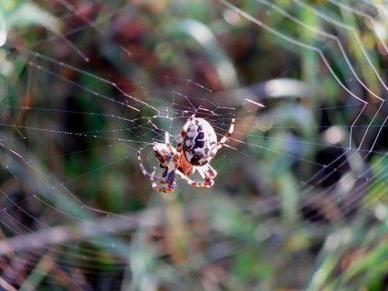 FOTKA - Výroba pavoučí trampolíny