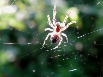 FOTKA - Pavouk pod slunečním rentgenem