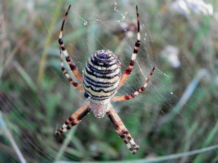 FOTKA - Spící pavouk