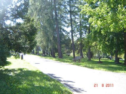 FOTKA - Hamzův park a arboretum Luže - Košumberk-..,