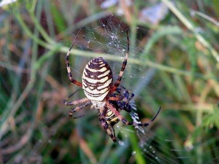 FOTKA - Pavouk artista