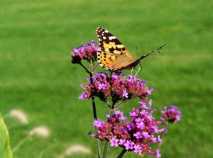 FOTKA - Motýlí promenáda