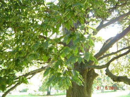 FOTKA - Hamzův park a arboretum,
