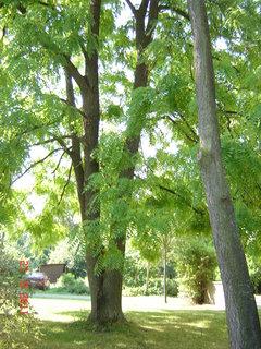 FOTKA - Hamzův park a arboretum ,,,,,,,,