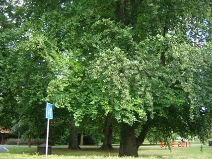 FOTKA - Hamzův park a arboretum ,,,,,,,,,,,