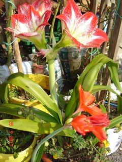 FOTKA - Už kvetou