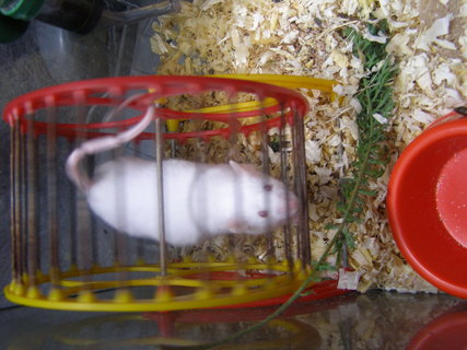 FOTKA - myška.,.,.,.,