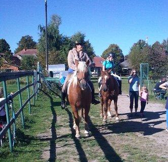 FOTKA - Koně 1