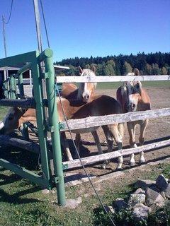 FOTKA - Koně 10
