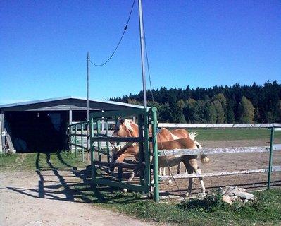FOTKA - Koně 11