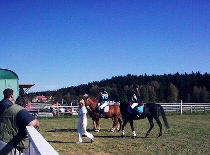 FOTKA - Koně 14