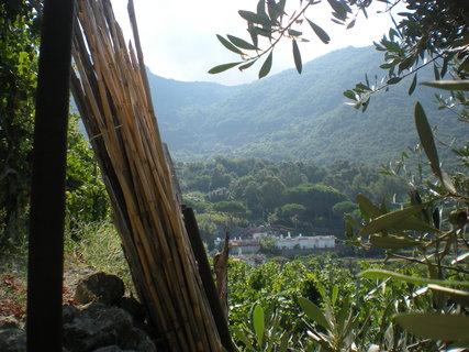 FOTKA - zbytky z vinobrani- pruhled vinici