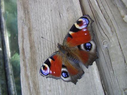 FOTKA - motýlek ...