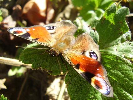 FOTKA - motýl    ..-