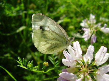 FOTKA - motýlek se vyhřívá na sluníčku