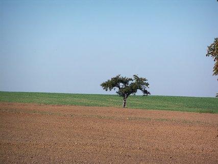 FOTKA - Sám v polích