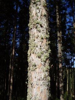 FOTKA - mech na stromě
