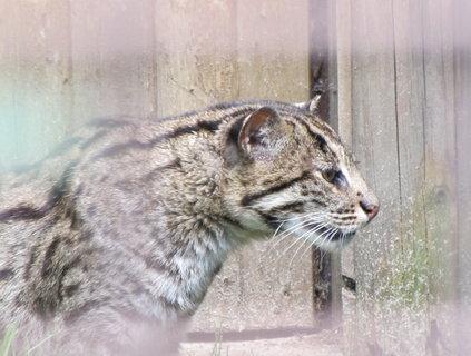 FOTKA - Hlava kočky