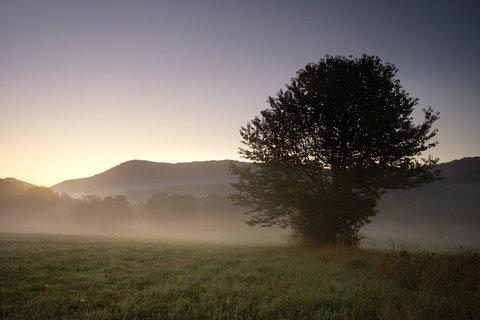 FOTKA - Mlha na louce