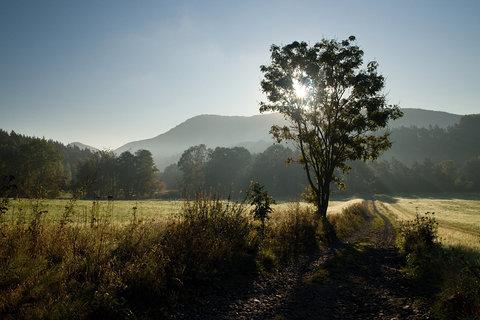 FOTKA - Slunečné ráno
