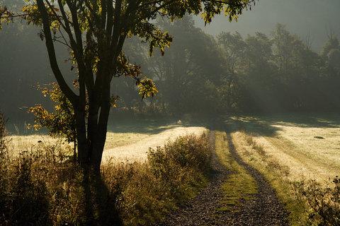 FOTKA - Podzimní ráno