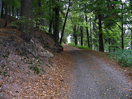FOTKA - Cesta lesem