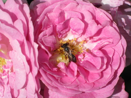 FOTKA - včelka