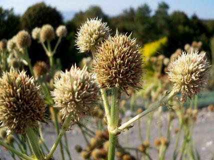 FOTKA - Rostlinky v arboretu