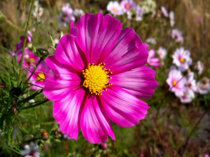 FOTKA - 27.9 se sluníčko na květinky smálo  dnes brrr