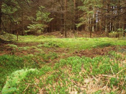 FOTKA - včera v lese