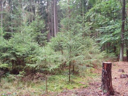 FOTKA - včera v lese  ...