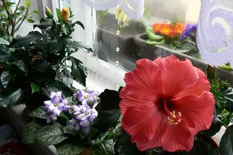 FOTKA - květiny na okně