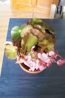FOTKA - Naše kvetoucí pokojovka