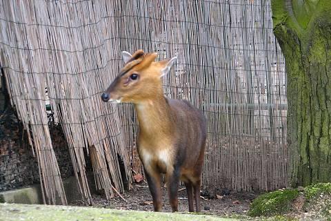 FOTKA - gazela