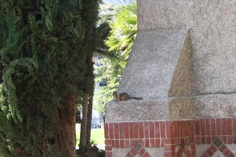FOTKA - veverka