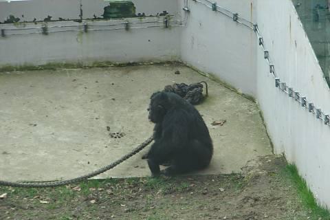 FOTKA - opičák