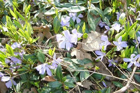 FOTKA - Jarní příroda
