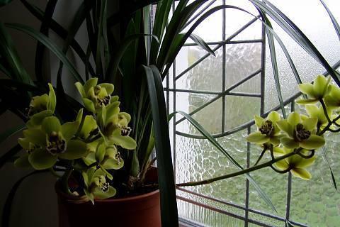 FOTKA - orchidej 15