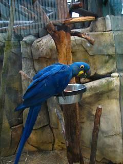 FOTKA - papoušek