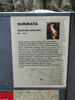 FOTKA - surikata popis