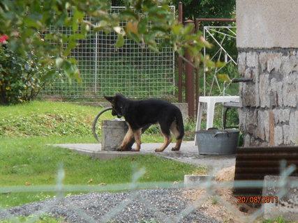 FOTKA - Štěně u sousedu