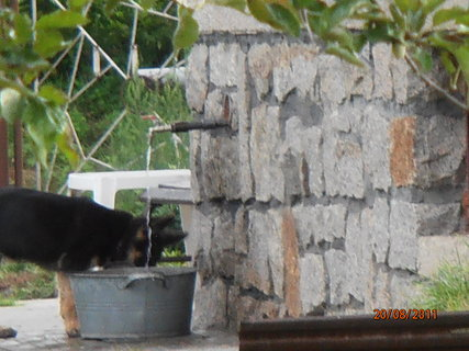 FOTKA - Štěně u sousedu.