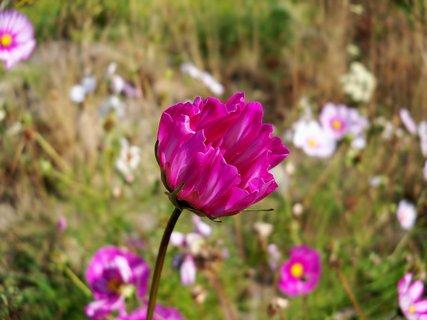 FOTKA - Květ babího léta